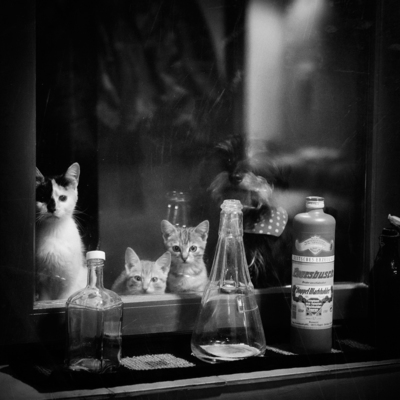 Fenster Hattingen photographer steffi atze hattingen animals strkng